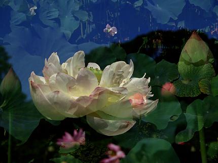 蓮精 Lotus
