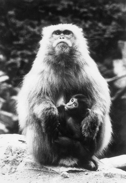 猿神 Monkey Planet
