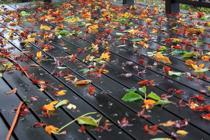 落ち葉が敷きつめられたテラス