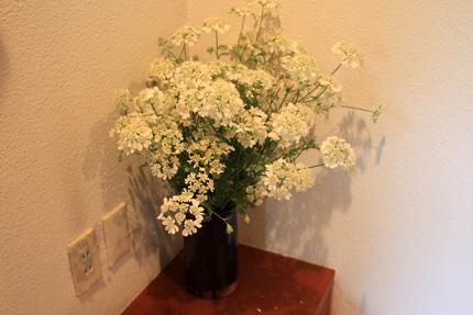 オルラヤホワイト もくもく咲いて、ふるふる散ります