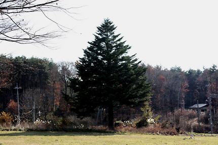 テラスの左手に大きな樅の木が見えます