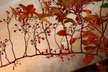 かわいい小さな赤い実