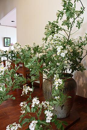 見事な枝ぶりの野バラ