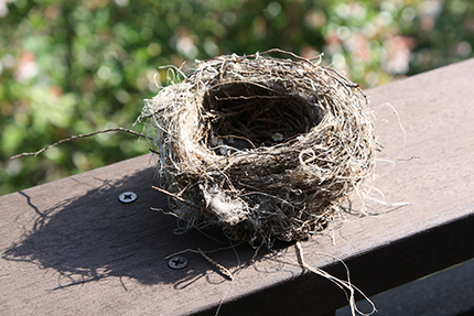 小枝、枯葉、そしてビニール紐でできた鳥の巣