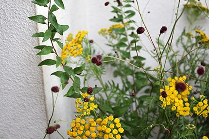タンジーもワレモコウも、まあるくて、ぎゅっとした小さな花です