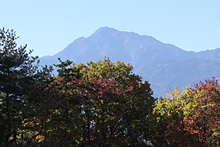 色づいた雑木林と甲斐駒ヶ岳、澄みわたる秋の空