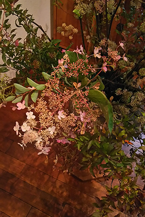 夏の盛りに白く咲いたノリウツギの花は、秋の深まりとともに紅く色づいていきます